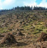 Зміни в законі дозволять боротись із незаконною вирубкою лісів