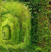 В столиці знайомитимуть із Тунелем кохання