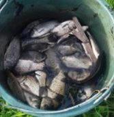 Понад  8 тисяч гривень порушники сплатили за браконьєрство