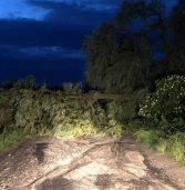 Буревій валив дерева в селі (фото)