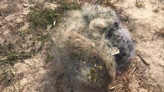 Рибпатрульні виявили заборонені знаряддя лову